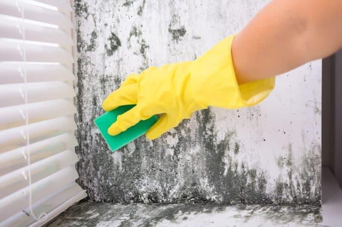 Cum scapi de mucegaiul din casa