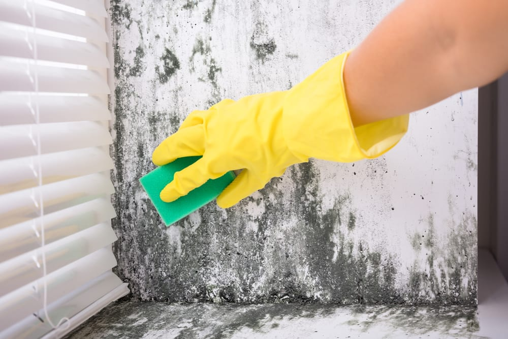 mucegaiul din casa